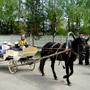 СОЦ Горизонт: Конные прогулки на территории