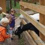 Спортивно-развлекательный парк Дракино: Зоопарк на территории парка