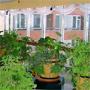 Санаторий Подмосковье: Зимний сад в санатории