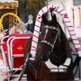 ГК Пушкарская Слобода: Конные прогулки