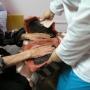 Центр реабилитации Вольгинский: Парафинолечение