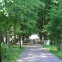 Центр реабилитации Вольгинский: Аллея на территории