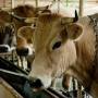 Дом отдыха Артиленд: Ферма на территории